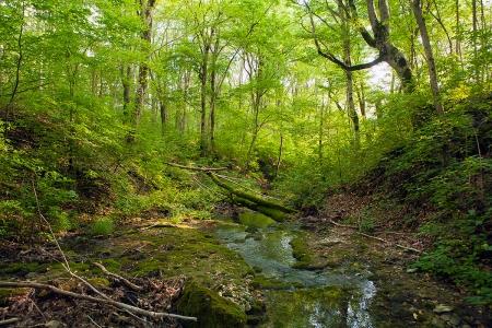 Лесной источник. Дорога к истокам.