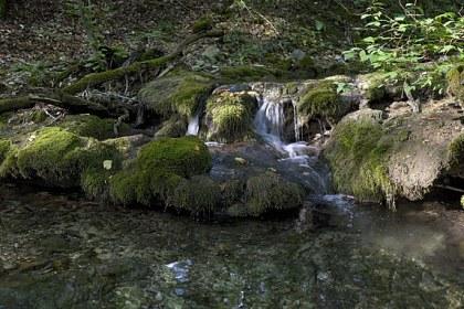 Панорама. Кавказ. Лесной ручей.