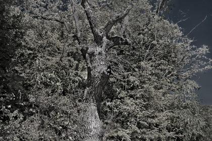 Сказка южного леса.