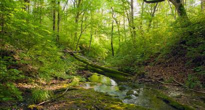 Лесной источник. Догрога к истокам