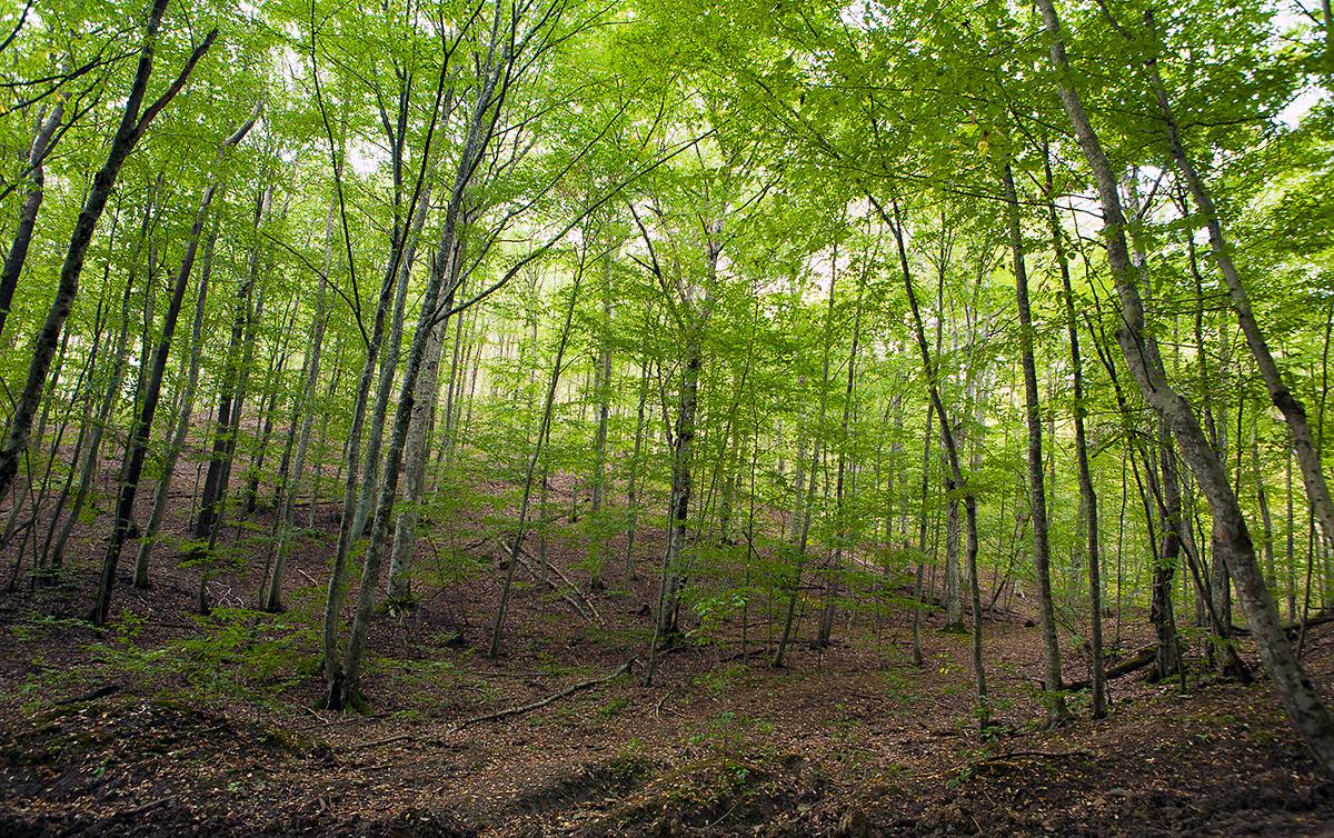 лесной источник