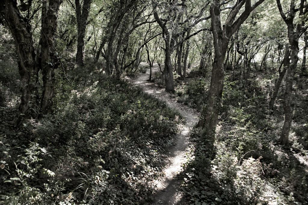 сказка южного леса